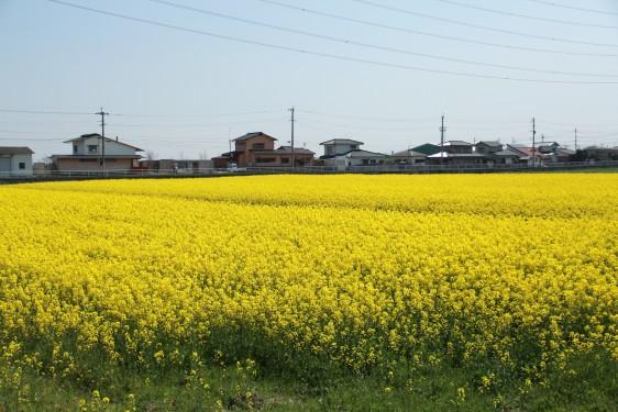 福岡県 遠賀郡遠賀町